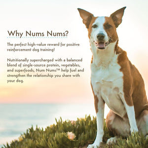 Nativo Naturals Num Nums™ Superfoods Salmon Training Treats for Dogs  - Ethically Sourced, Made in USA - Grain & Gluten Free