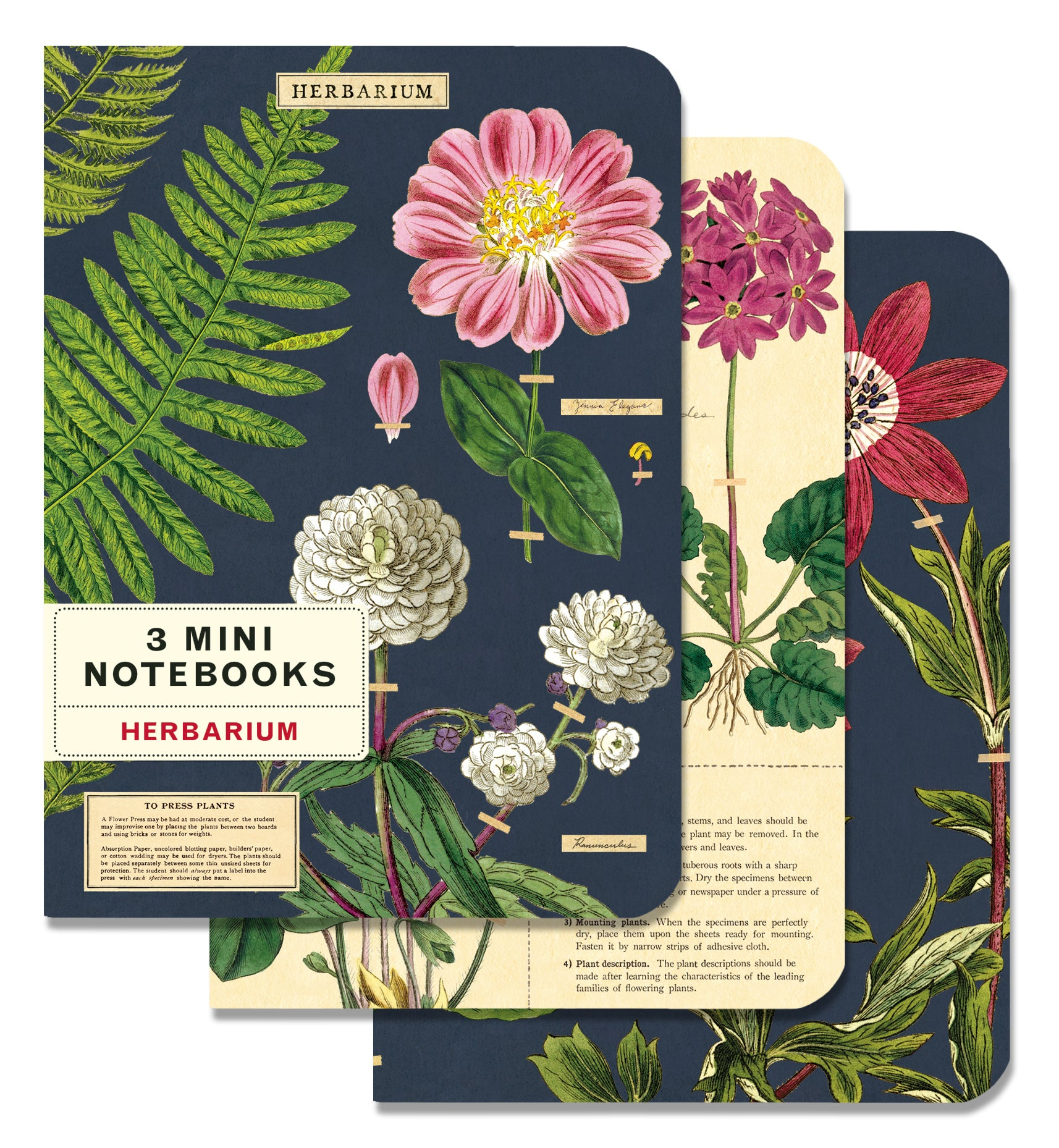 Cavallini - Herbarium Maps 3 Pack Mini Notebooks