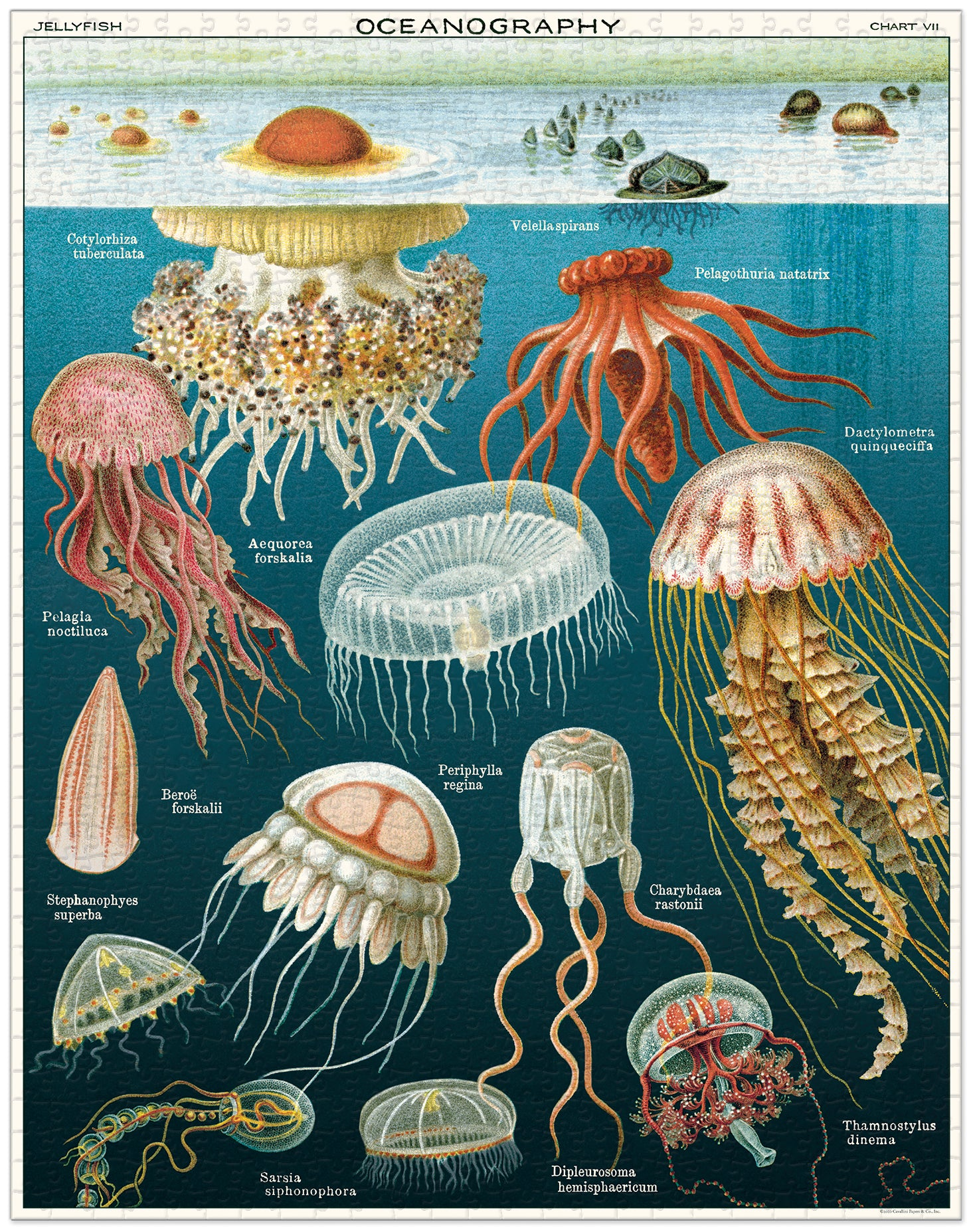 Jellyfish 1000 pc Cavallini Puzzle