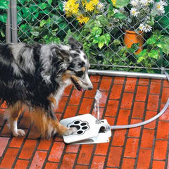 Outdoor Dog Pet Drinking