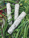 White Sage Smudge Stick ~ 8-9in