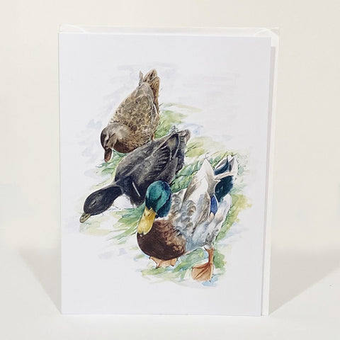 Greetings Card - Mallards