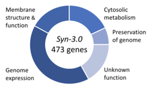 JCVI-Syn3.0 genes (E. coli codon optimized)