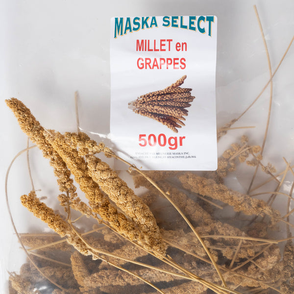 Maska Select Millet en Grappe / Maska Select bunch millet