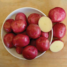 Load image into Gallery viewer, Seed Potatoes