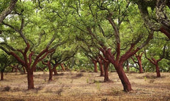 Cork Tree Forest