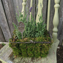 Load image into Gallery viewer, Planter - Lavender for Love