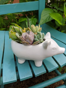 Planter - This little piggy went to market