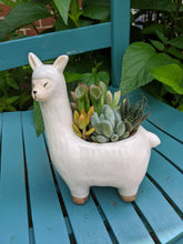 Load image into Gallery viewer, Planter - No Drama Llama