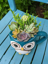 Load image into Gallery viewer, Planter - Owl Always Love You