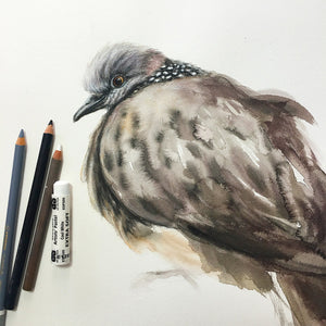 Spotted Turtle Dove - 15 x 22""