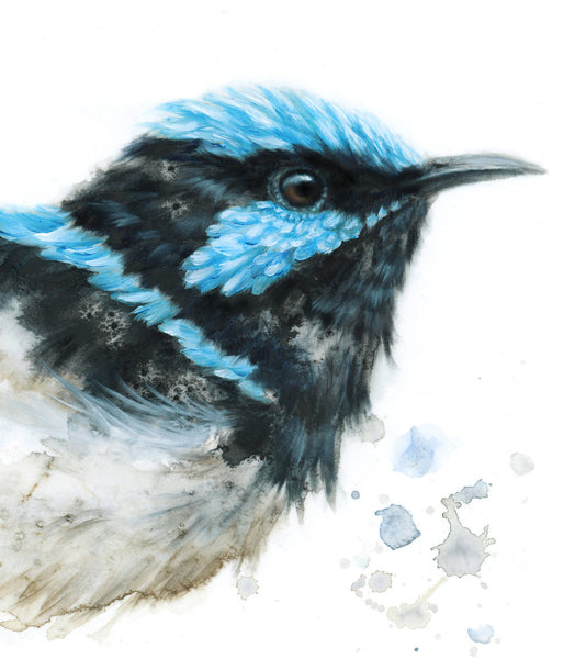 Timed Edition Print - Superb Fairywren