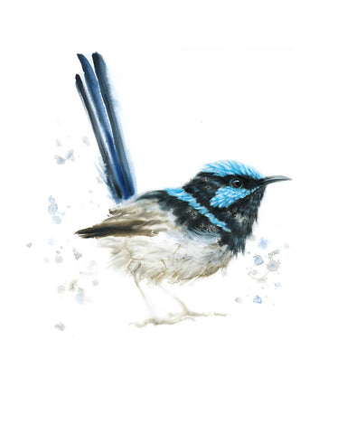 APRIL 2019 Timed Edition Print - Superb Fairywren