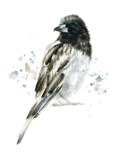 JUNE 2019 Timed Edition Print - Butcherbird