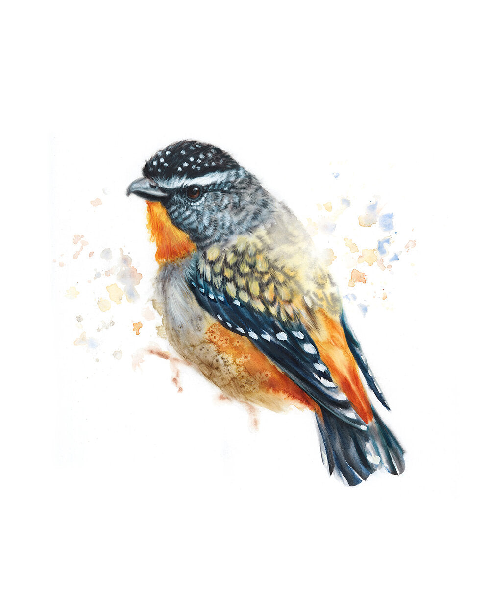 Timed Edition Print - Spotted Pardalote