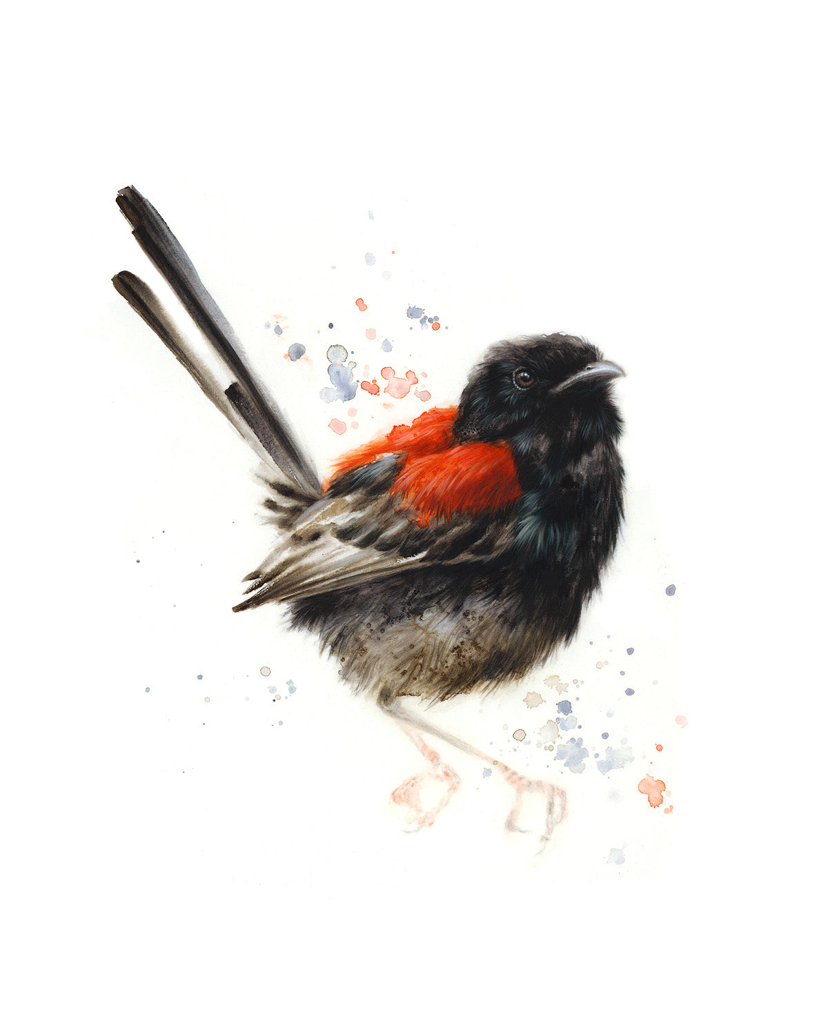 JULY 2020 Timed Edition Print - Red-Backed Fairywren