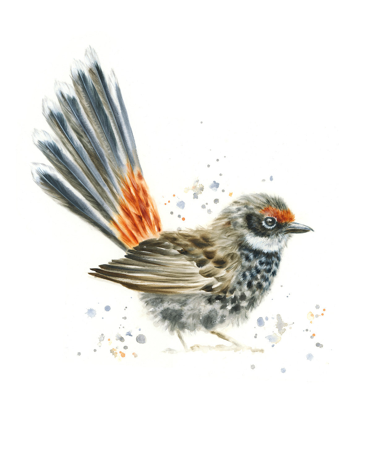 Timed Edition Print - Rufous Fantail