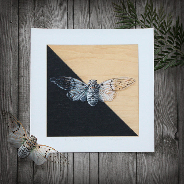 Black-Masked: Cicada - Limited Edition Print