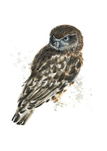 Boobook Owl #1 - Limited Edition Print