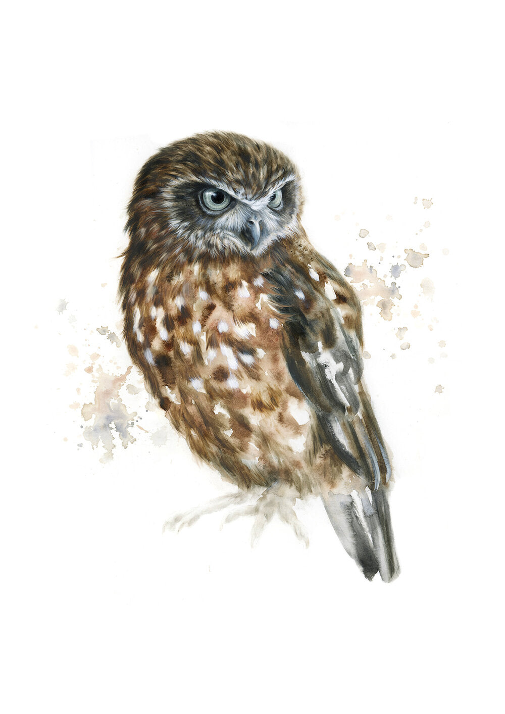 Boobook Owl #2 - Limited Edition Print