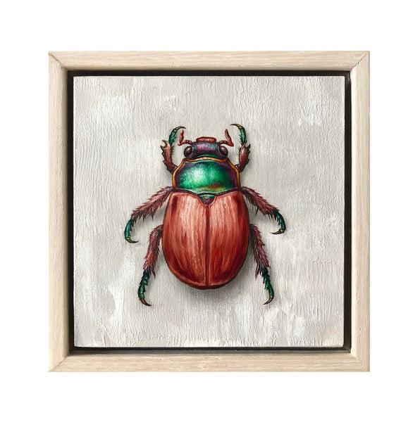 Christmas Beetle #1