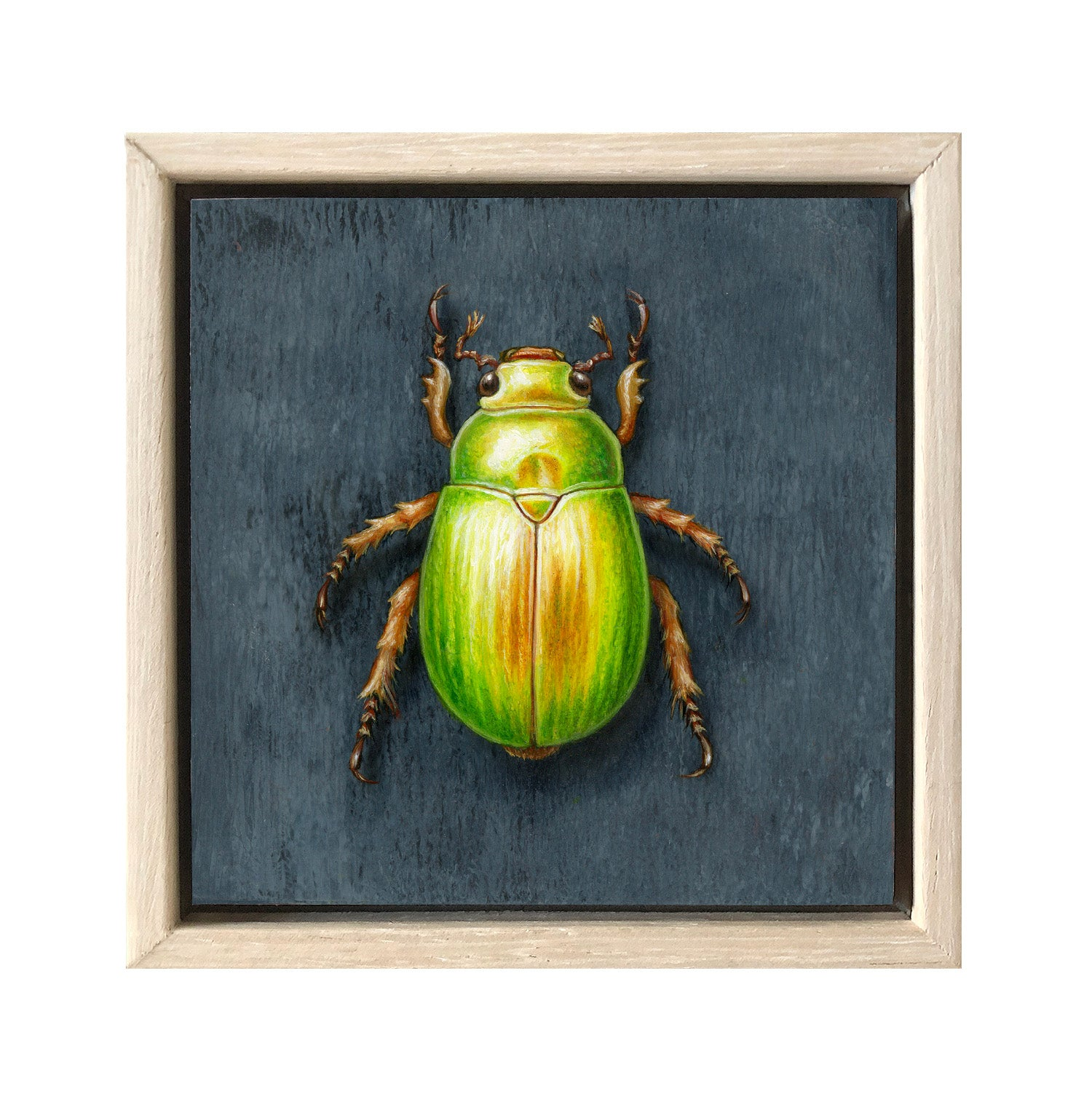 Christmas Beetle #11