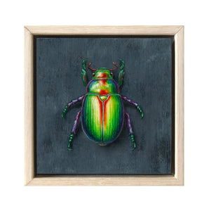 Christmas Beetle #12