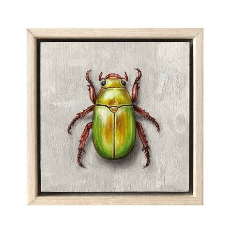 Christmas Beetle #3
