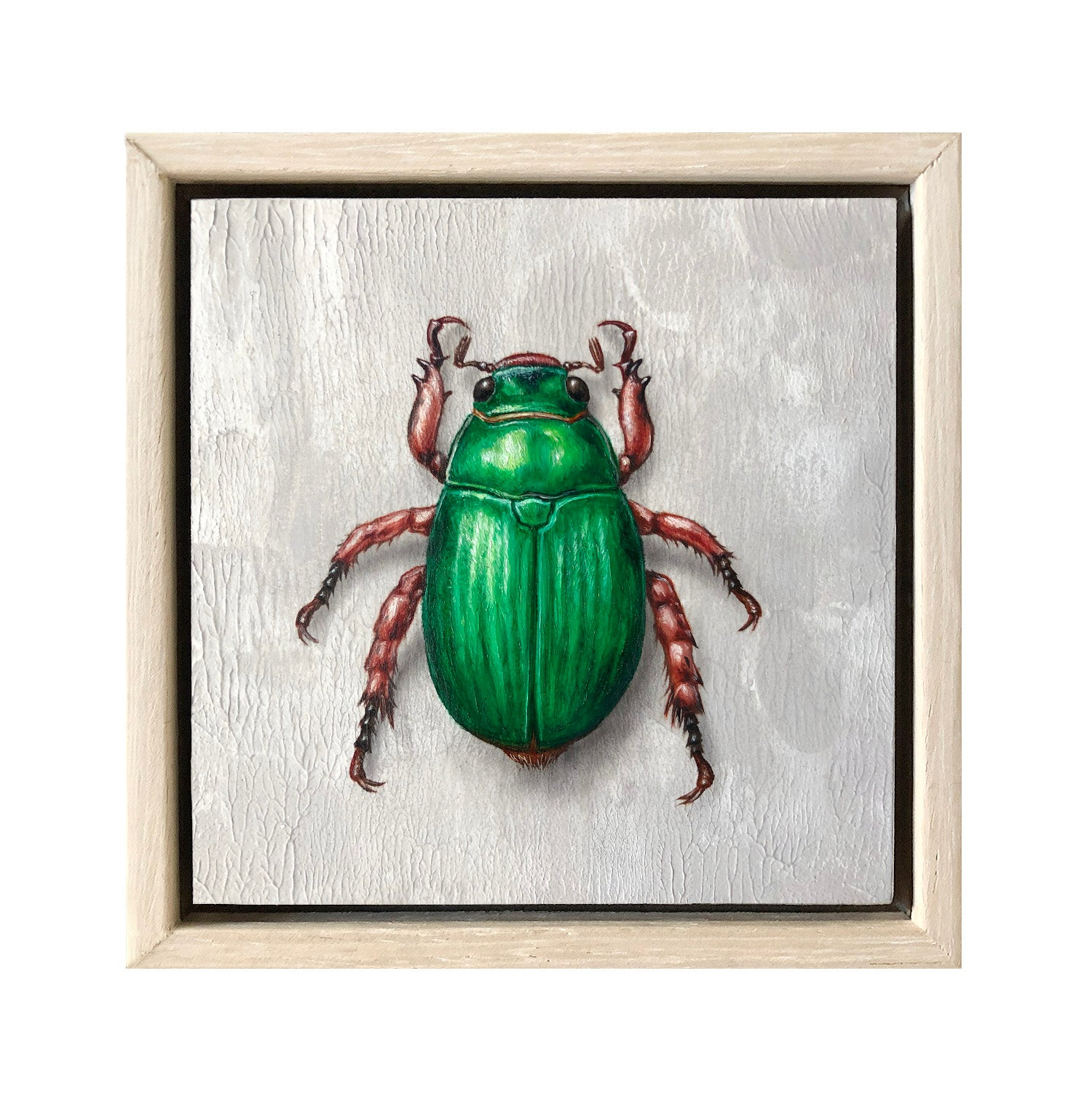 Christmas Beetle #5