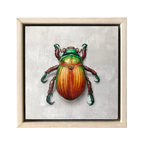 Christmas Beetle #6
