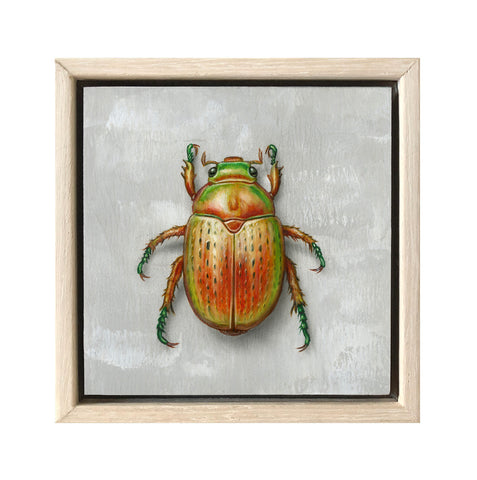 Christmas Beetle #7