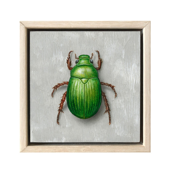 Christmas Beetle #8
