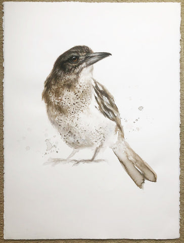 Young Butcherbird - 22 x 30""
