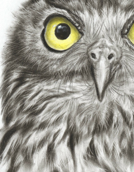 Barking Owl #2 - Limited Edition