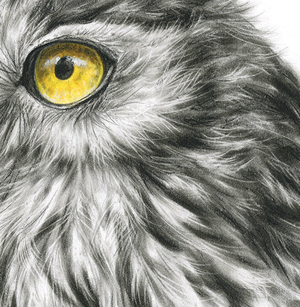 Barking Owl #1 - Limited Edition