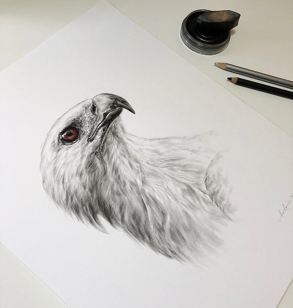 White-bellied Sea Eagle - Limited Edition