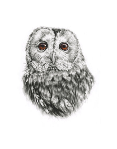Tawny Owl - Limited Edition