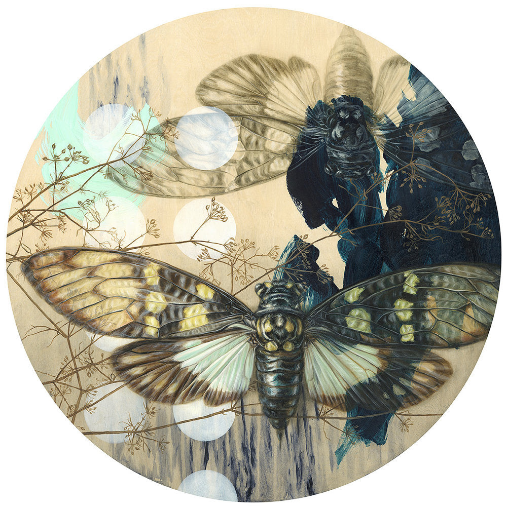 """Cicada Ellipse"" - Limited Edition Print"