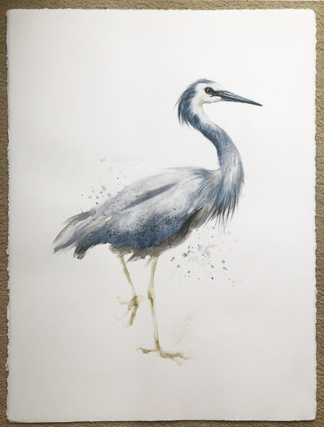 White-Faced Heron  - 22 x 30""