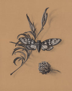 Cicada Still Life on Kraft #1 - Limited Edition Print