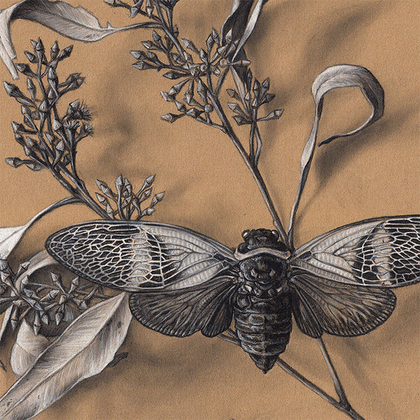 Cicada Still Life on Kraft #2 - Limited Edition Print