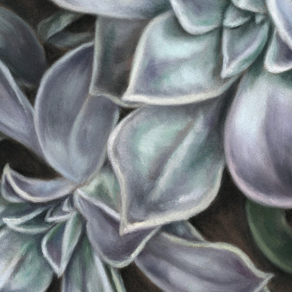 Succulent #2 - Limited Edition Print