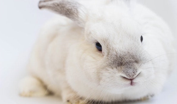 Why Choose Cruelty Free Products?