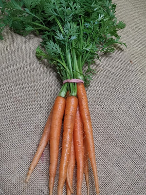 Carrots - Dutch Bunch
