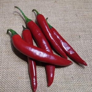 Chilli - Long Red
