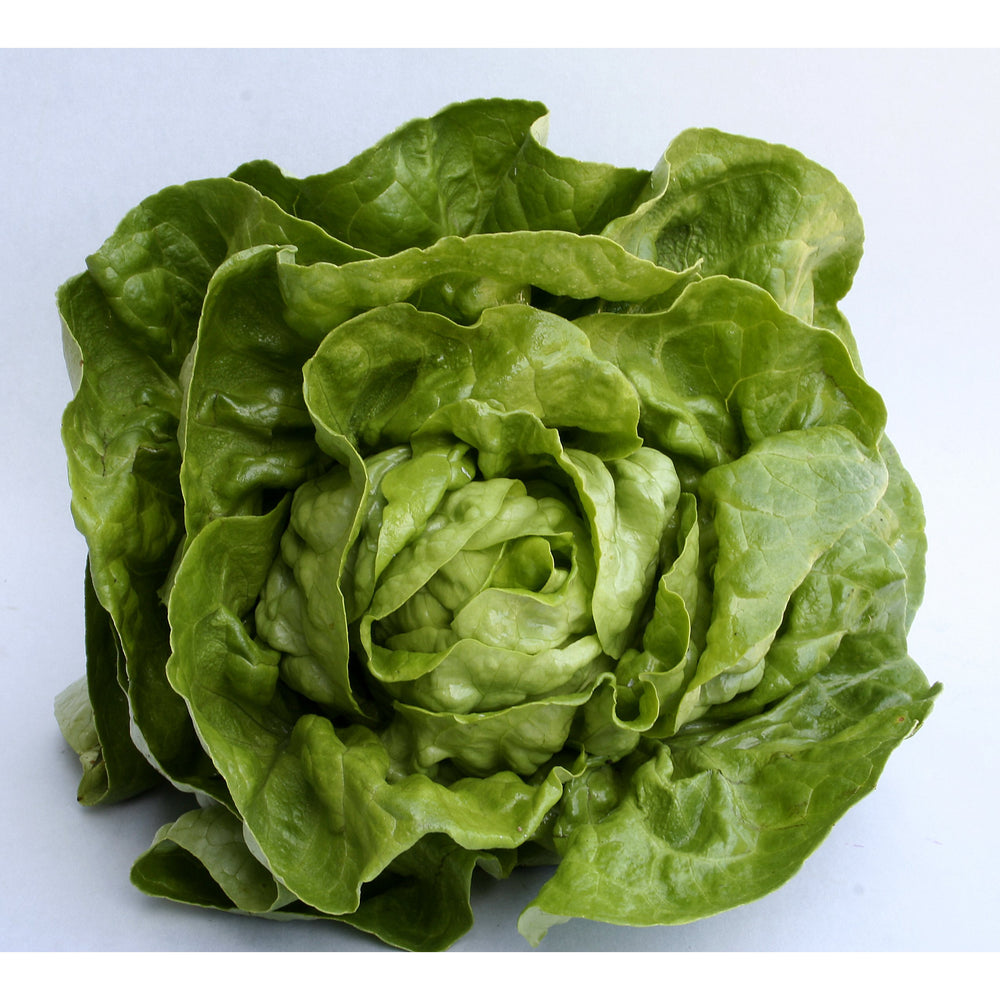Load image into Gallery viewer, Lettuce - Baby Cos