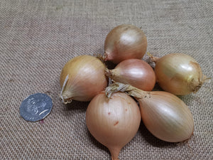 Load image into Gallery viewer, Onions - Pickling