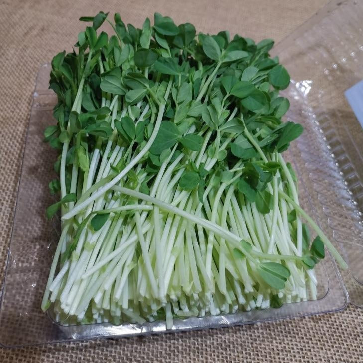 Snow Pea - Sprout