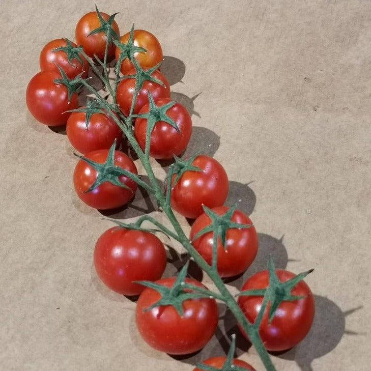 Load image into Gallery viewer, Tomatoes - Cherry - Truss