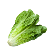Load image into Gallery viewer, Lettuce, Romaine